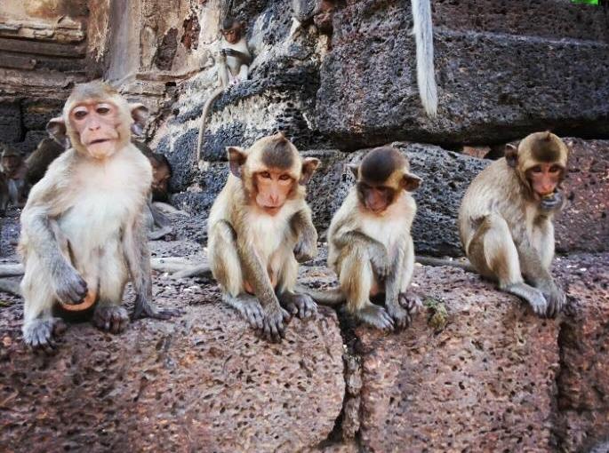 Teaching in Thailand:  Part 4 – Six Months in MonkeyCity