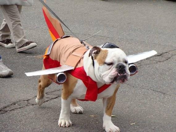 87697-dogs-dog-plane.jpg